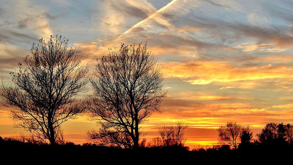Traer i silhuet mod orange blaa himmel