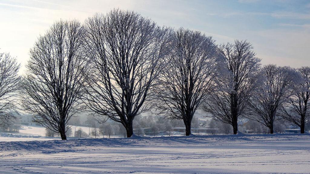 Traer paa raekke vinterlandskab