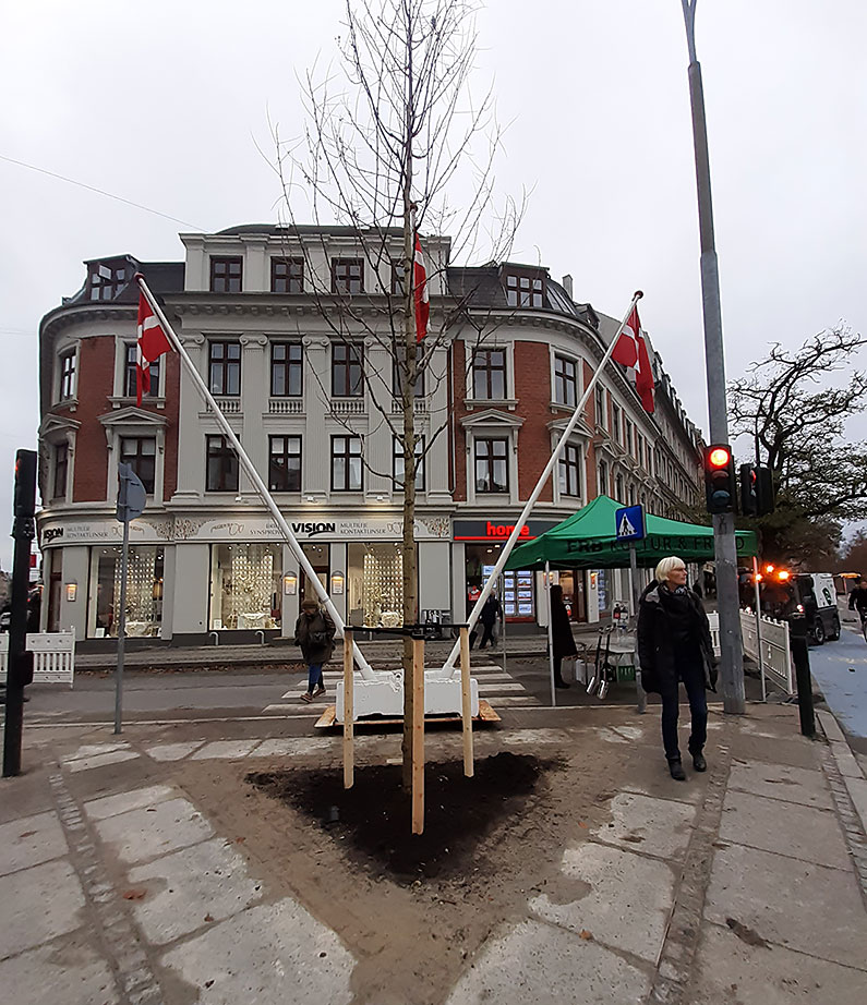 Nyt bytrae paa Frederiksberg Akacietrae